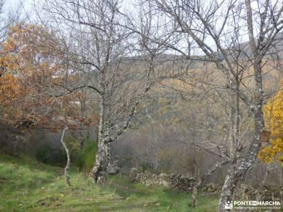 Ruta de los Castaños, Rozas de Puerto Real;madrid excursiones senderismo trekking senderismo selva